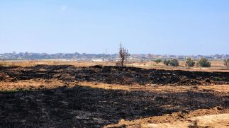 Israeli orchards burned by incendiary kites, 2018.